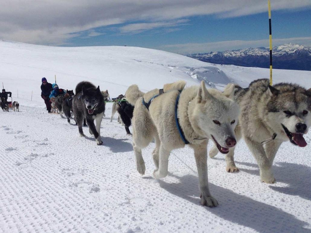 Huskies vorm Schlitten am Matterhorn